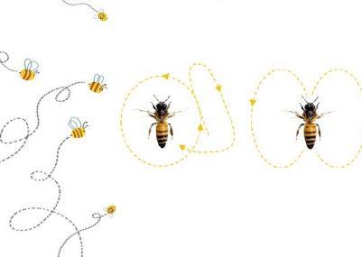 danza-api